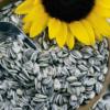 Venta de Semillas de Girasol Principal - Plenti S.A.S Bogotá Colombia - Elementos que Suman - Productos Naturales https://www.facebook.com/Plenticolombia-1964661053593138/ https://www.instagram.com/plenticolombia/